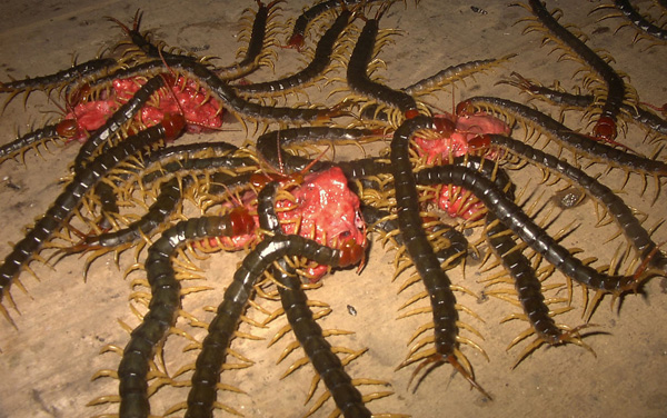 掠食性的陆生节肢动物